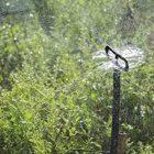 Irretec 100 pezzi farfalle farfalla spruzzatore irrigatore doccetta filettata in polietilene con innesto/filetto maschio 3 mm vaporizzatore nebulizzatore 360°